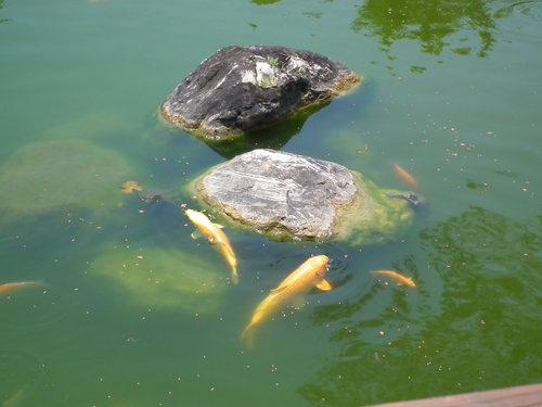 大鱉2.jpg