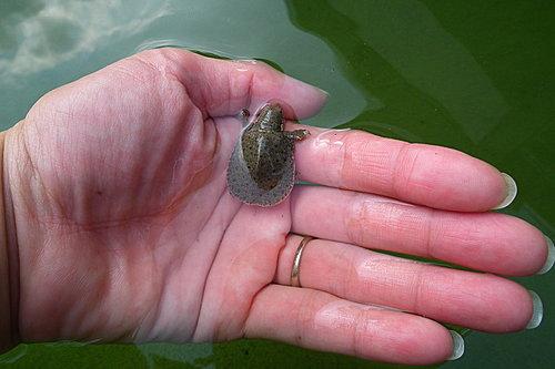 小鱉3.jpg
