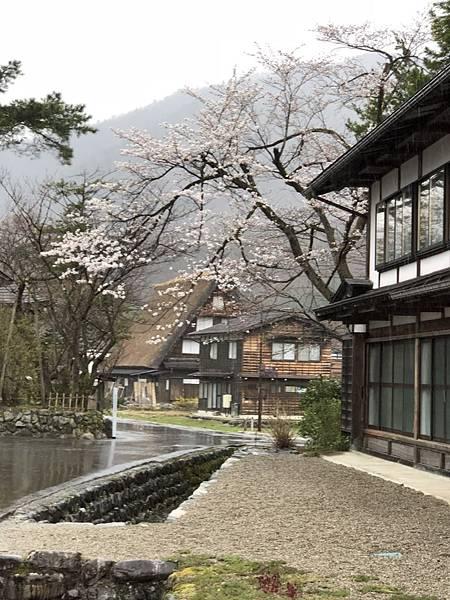 2018日本高山,白川,松本,明古屋之旅_180425_0240.jpg
