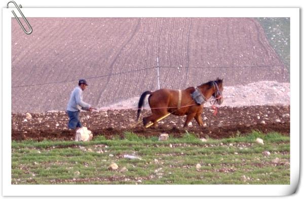 春耕中的馬兒與農夫