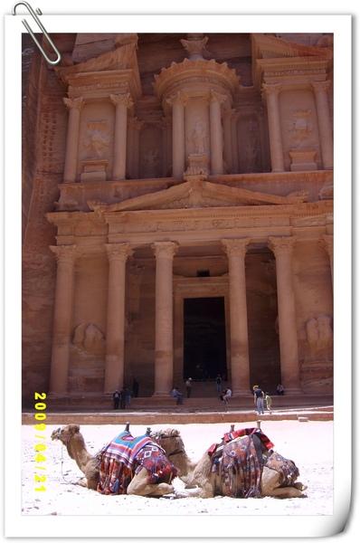 卡茲尼神殿前的駱駝