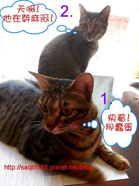 貓4.jpg