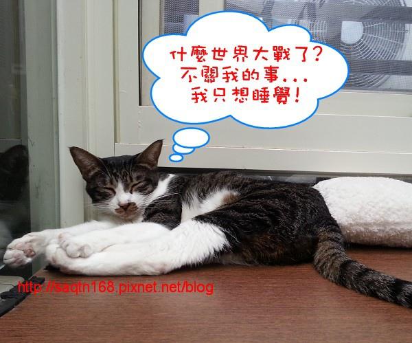 貓10.jpg