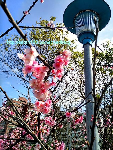 IMG_20160212_123418_HDR.jpg