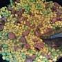 香腸炒玉米-2.jpg