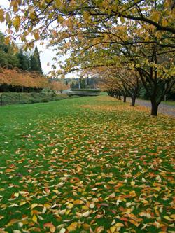 University of Washington-3