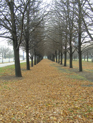 ChicagoStreetView-1(Michigan Lake Park, 2008 winter)