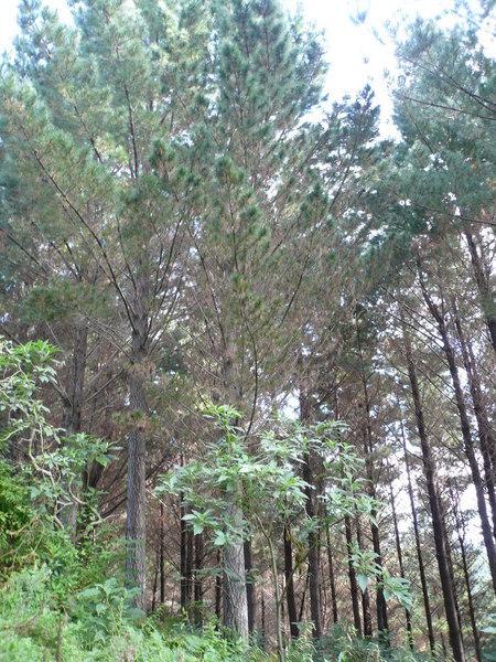 Forest - Donavon Block