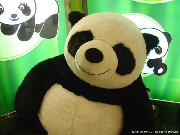 特寫大熊貓