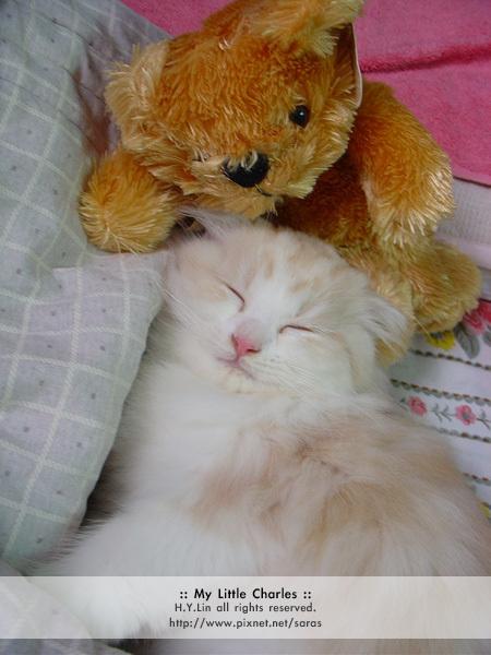 熊寶寶陪睡