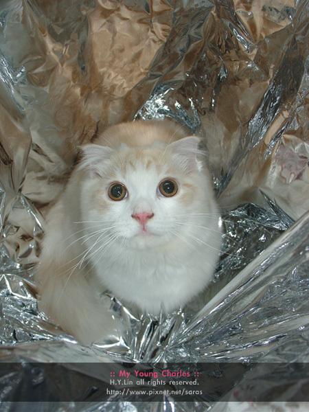 閃亮貓王子