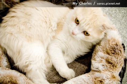 charles1218_008.jpg