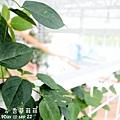 2012 9 22 香草菲菲 (132)