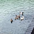 宜蘭 梅花湖 ~ (69)