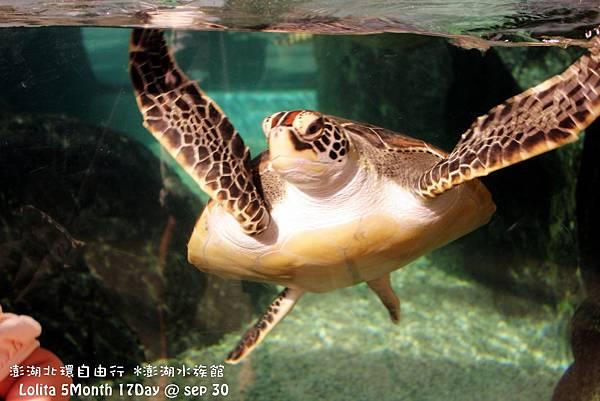 2012 9 30 澎湖水族館 (4)