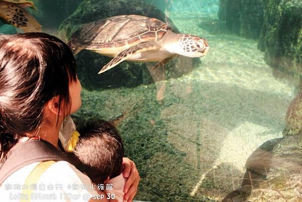 2012 9 30 澎湖水族館 (7)