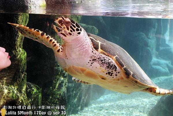 2012 9 30 澎湖水族館 (22)