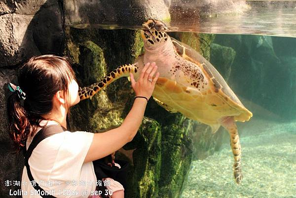 2012 9 30 澎湖水族館 (29)