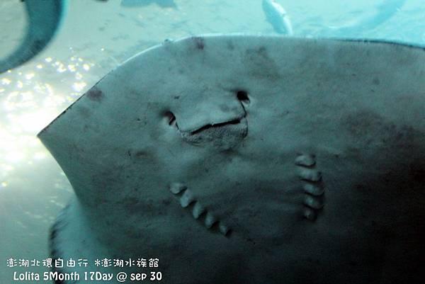 2012 9 30 澎湖水族館 (36)