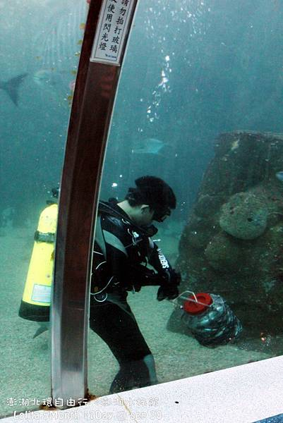 2012 9 30 澎湖水族館 (46)