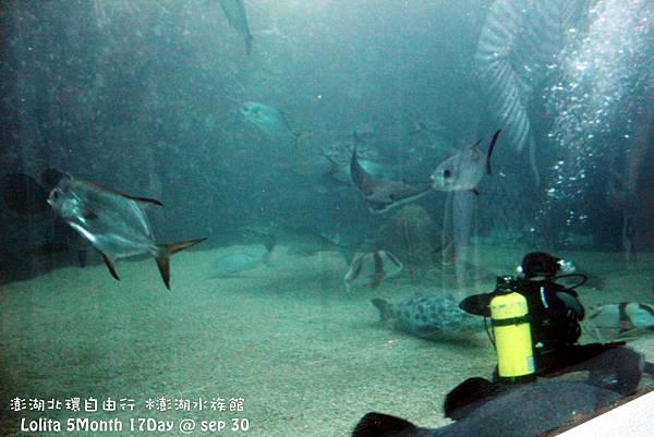 2012 9 30 澎湖水族館 (49)