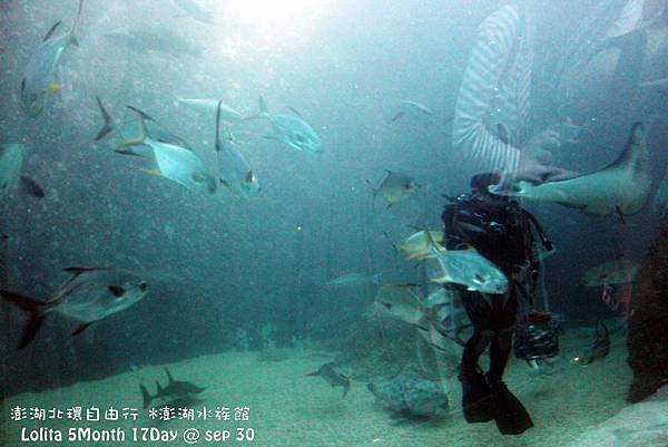 2012 9 30 澎湖水族館 (51)