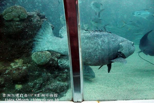 2012 9 30 澎湖水族館 (52)