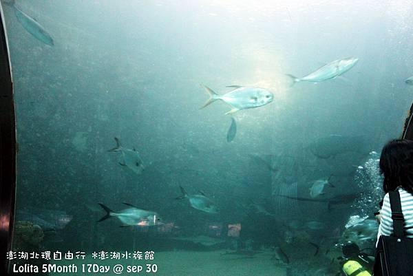 2012 9 30 澎湖水族館 (55)