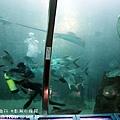 2012 9 30 澎湖水族館 (58)