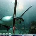2012 9 30 澎湖水族館 (59)