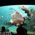 2012 9 30 澎湖水族館 (62)