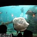 2012 9 30 澎湖水族館 (63)
