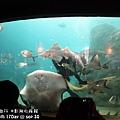 2012 9 30 澎湖水族館 (65)