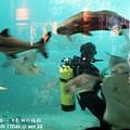 2012 9 30 澎湖水族館 (68)