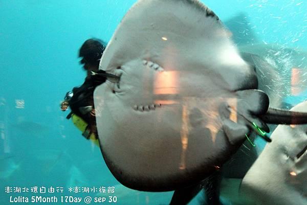 2012 9 30 澎湖水族館 (72)