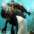 2012 9 30 澎湖水族館 (73)