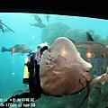 2012 9 30 澎湖水族館 (75)