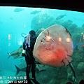 2012 9 30 澎湖水族館 (77)
