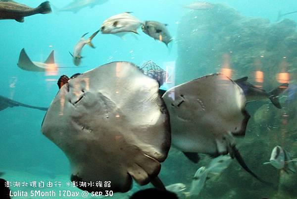 2012 9 30 澎湖水族館 (79)