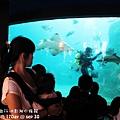 2012 9 30 澎湖水族館 (83)
