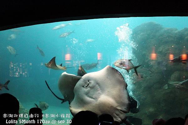 2012 9 30 澎湖水族館 (85)
