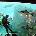 2012 9 30 澎湖水族館 (90)
