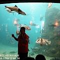 2012 9 30 澎湖水族館 (93)