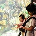 2012 9 30 澎湖水族館 (98)
