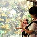 2012 9 30 澎湖水族館 (101)