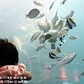 2012 9 30 澎湖水族館 (112)