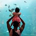 2012 9 30 澎湖水族館 (113)