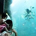 2012 9 30 澎湖水族館 (117)