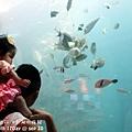 2012 9 30 澎湖水族館 (118)