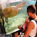 2012 9 30 澎湖水族館 (120)